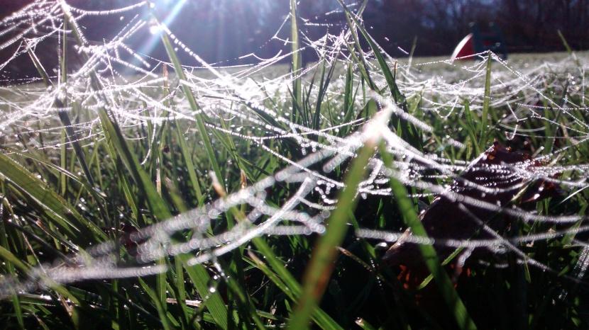 Spider Morning
